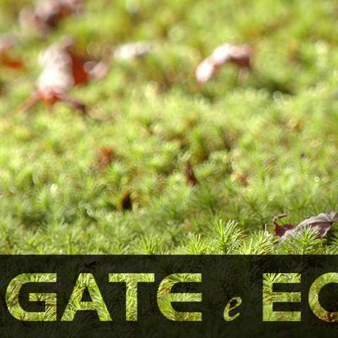 Gate-e-ECO_phone